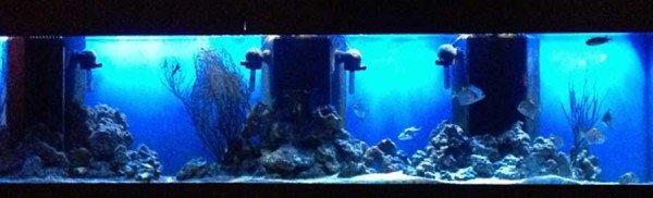 Aquarium Dvars